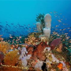 WAOW liveaboard für Tauchsafari - segelt und kreuzt in Indonesien ALOR paradis des Unterwasserfotografen, macro Foto, Critters, Korallen und Riffe -