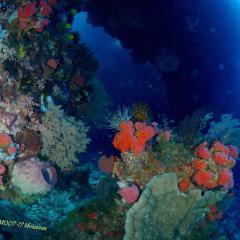 WAOW Liveaboard scuba diving Moluccas Ambon island Halmahera