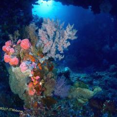 WAOW Liveaboard scuba diving Moluccas Halmahera  Ambon Island